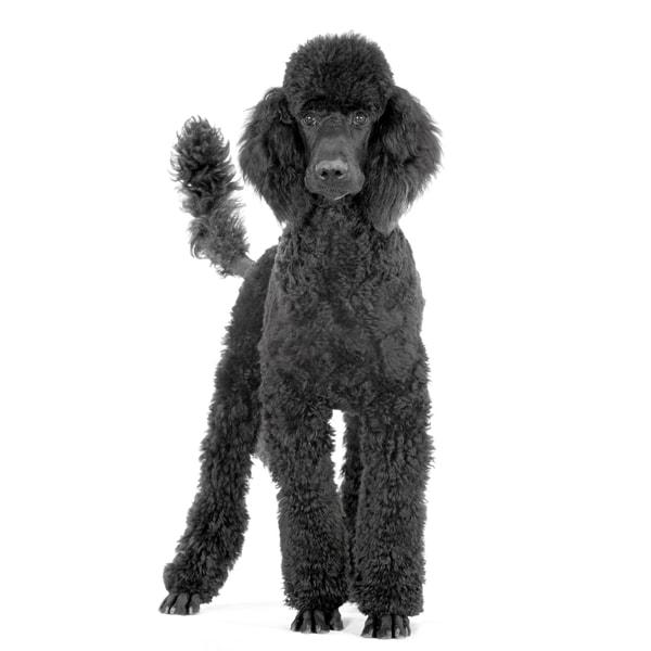 WHM Server Poodle
